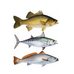 Bill-Mar-Fish-Decals9